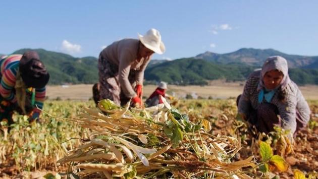 Çiftçiye bir darbe daha; vergi sıfırlandı, buğdayda ithalatın önü açıldı