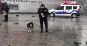 Polislerden örnek davranış, kar yağışında sokak hayvanlarını beslediler