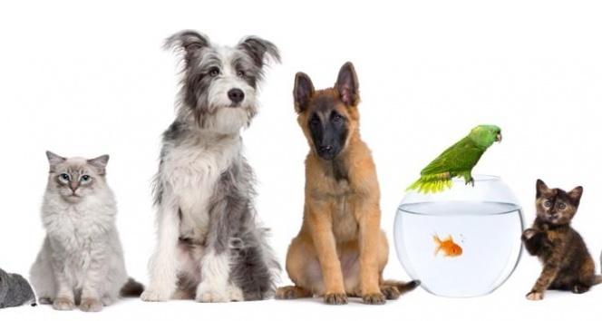 En Uygun Evcil Hayvan (Kedi - Köpek - Kuş) Mamalarını Nerede Bulabilirim?