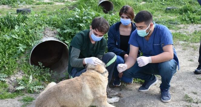 Tarsus'ta silahla vurulan köpek tedavi edildi