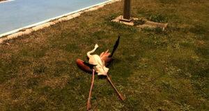 Flamingoların toplu ölümü araştırılıyor