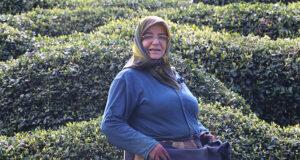 Rize'de yaklaşan yaş çay sezonu öncesi çay bahçelerinde hazırlıklar başladı