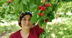 Antalya'da buruk erkenci kiraz hasadı