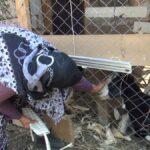 manavgat-ta-yangindan-cani-pahasina-kucukbas-hayvanlarini-kurtardi-6115737c5cdf0