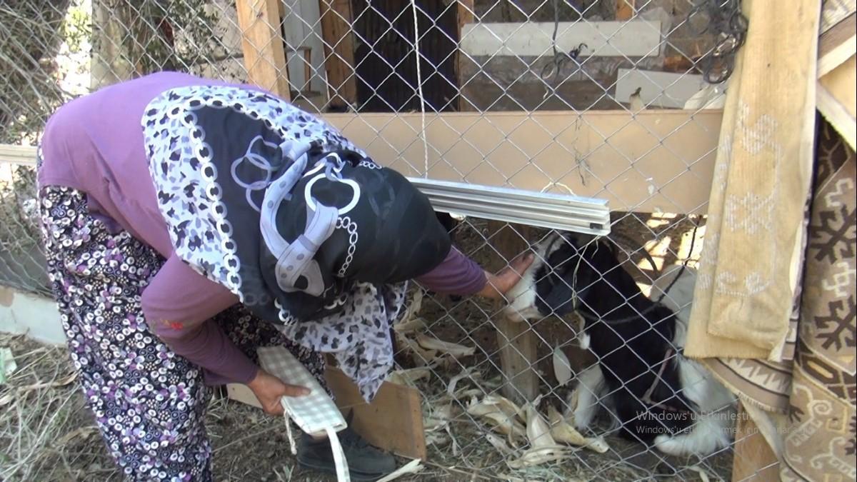 Manavgat'ta yangından, canı pahasına küçükbaş hayvanlarını kurtardı